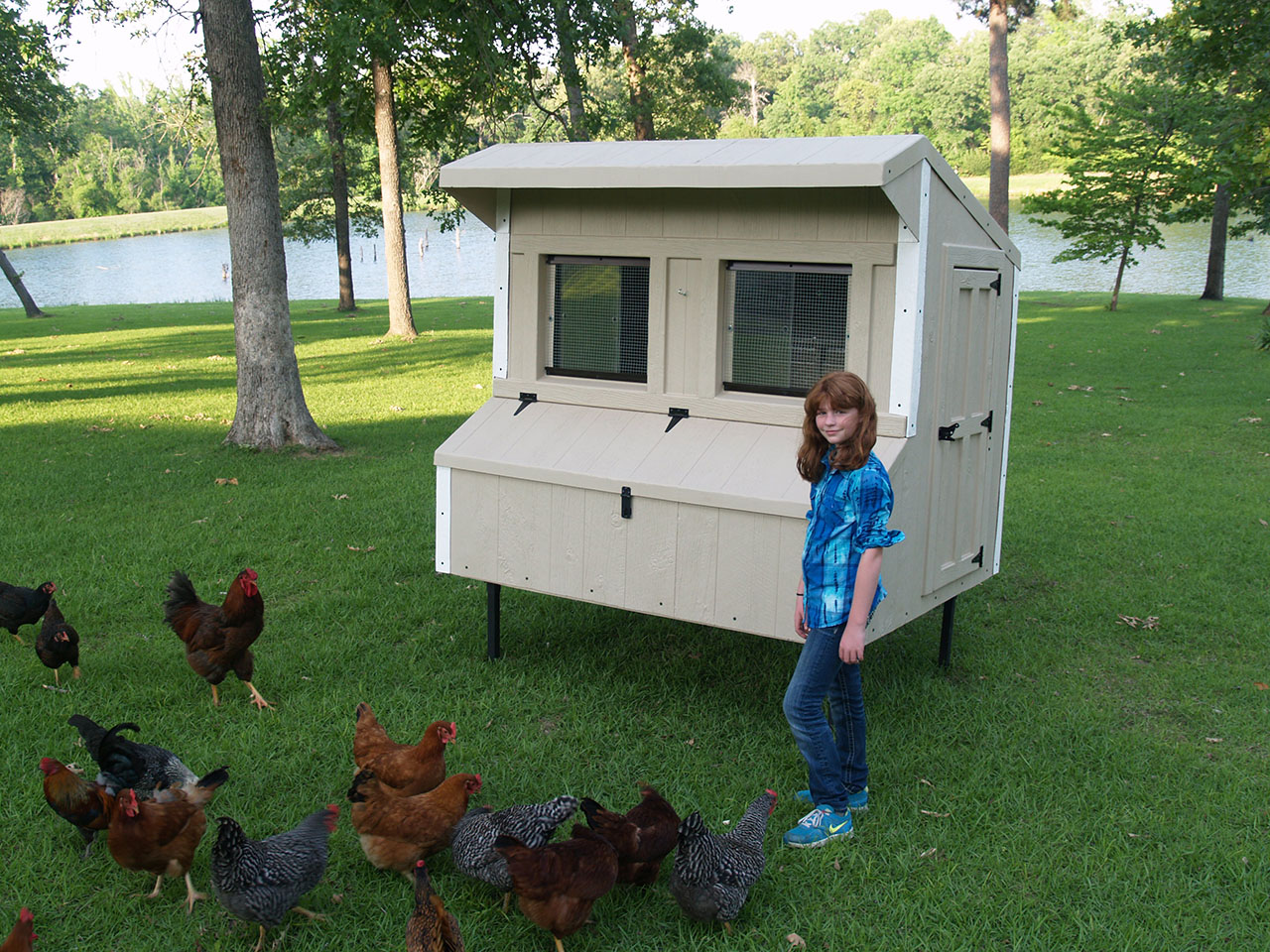 Eggstreme chicken coops 6 39 x 5 39 traditional fiberglass for Chicken coop size for 6 chickens