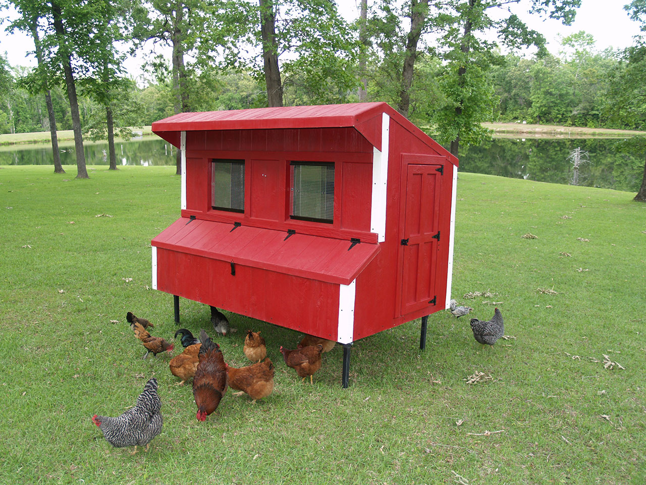 Eggstreme chicken coops 8 39 x 5 39 traditional fiberglass for Chicken coop for 8 10 chickens